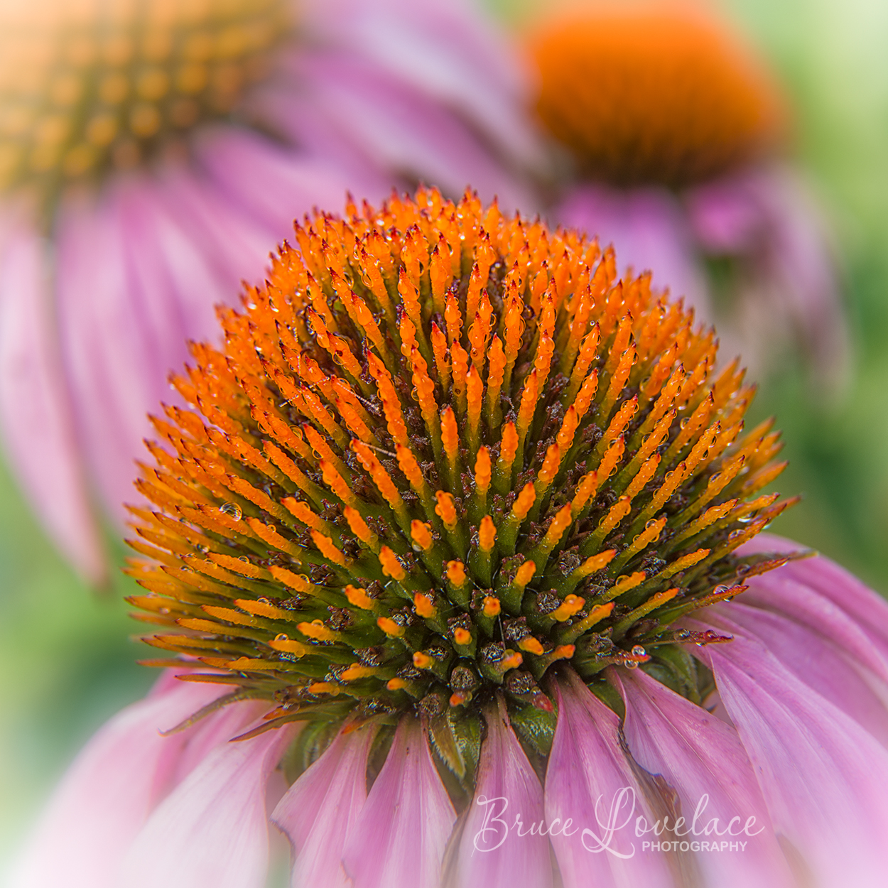Flower photo with extension tubes