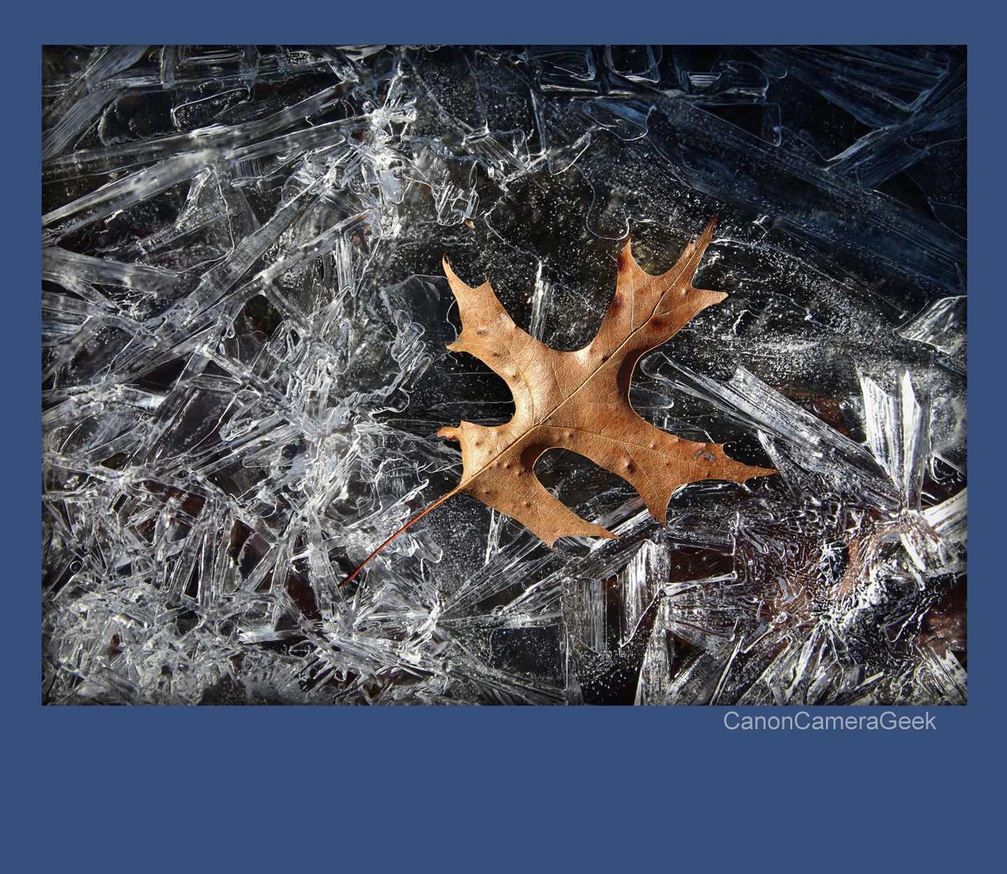Leaf and ice - Macro Photography With the EOS 70D