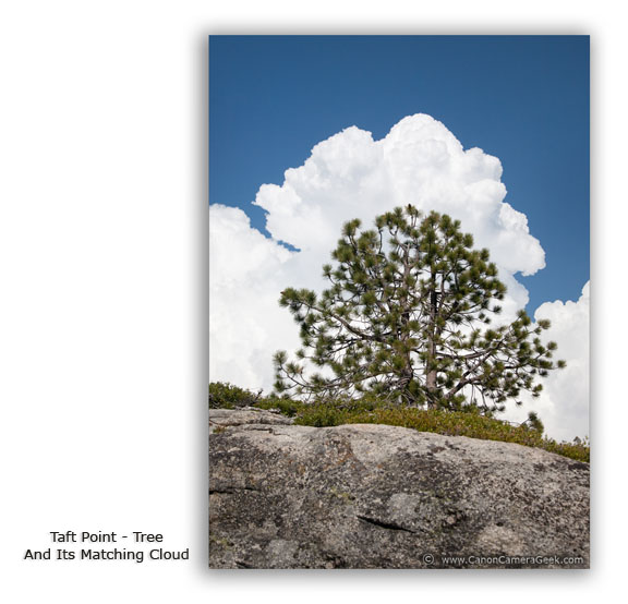 Taft Point-tree and matching cloud taken with Canon 5d