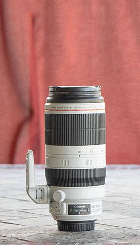 Canon EF 100-400mm Lens