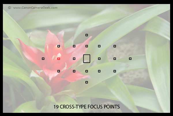 Canon EOS 70D 19 point cross-type focusing