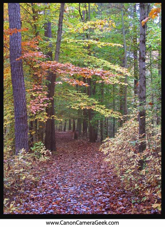 Canon G11 October 2012 Fall foliage-Ceres Park-NJ