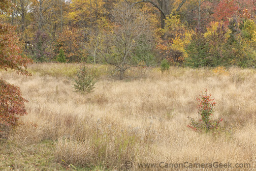 Fall photo - Taken with the Canon G1X Mark II camera and a Rocketfish tripod on a cloudy day