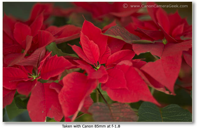 Great Color with Canon 85mm at f 1.8