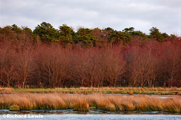Pine Barrens - Photography by Richard Lewis