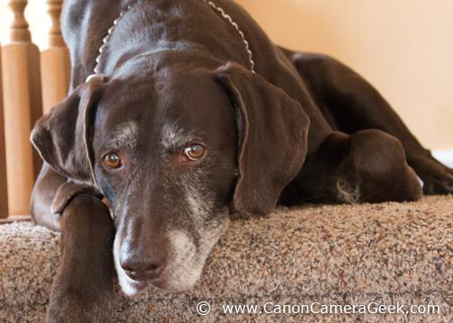 Dog at ISO 1000