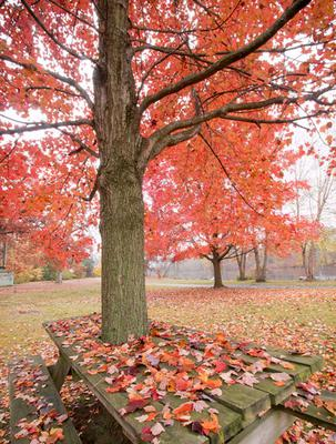 Fall Leaves on Picnic Table <br> EOS 70D and  EF-S 10-18 at 10mm Focal Length