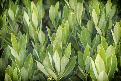 Photo of leaves taken with G1X Mark II in near Denton, North Carolina