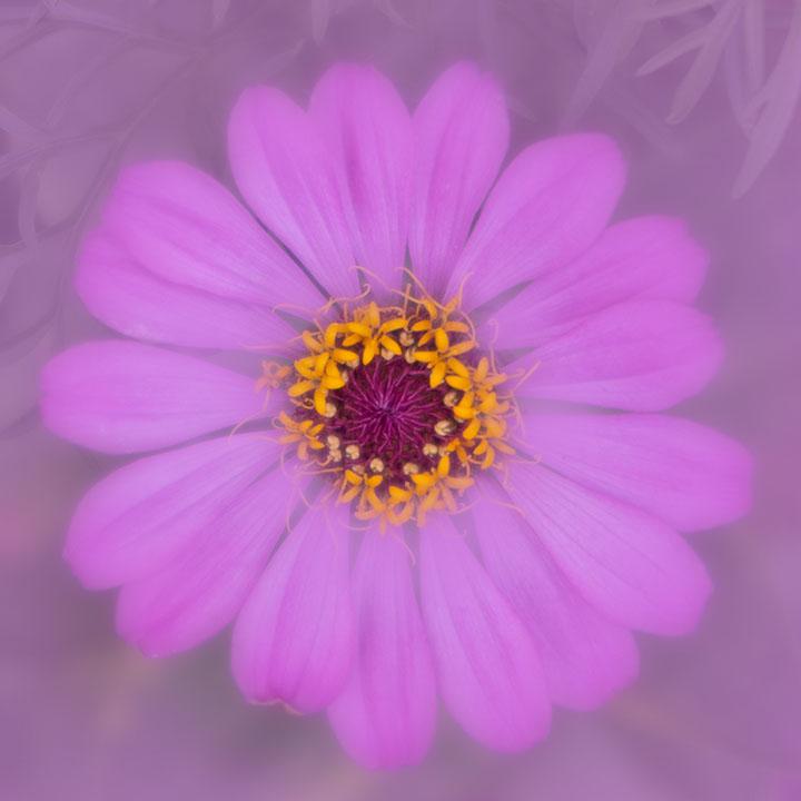 G1X Mark II Flower photo