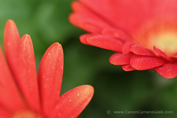 Macro photo with Canon 85mm f/1.8 lens