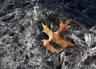 Leaf and Ice
