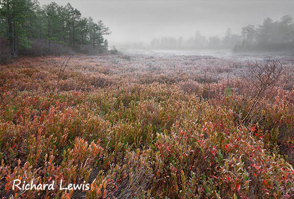 Richard Lewis Photography - New Jersey Pinelands