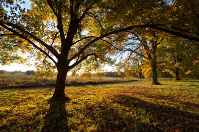 Photographing Fall Foliage With my 70D