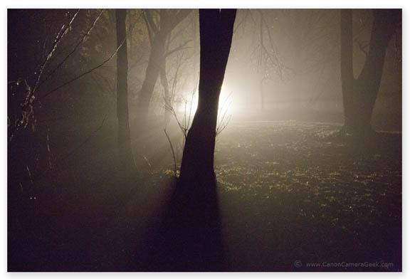 Nighttime Fog Scene