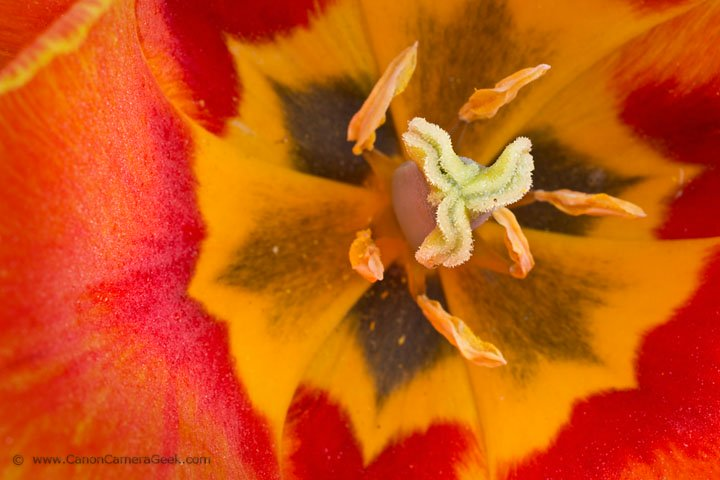 Macro photo of flower using extension tubes