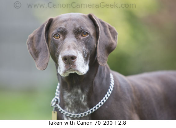 Canon 70-200mm f2.8 lens Dog portrait