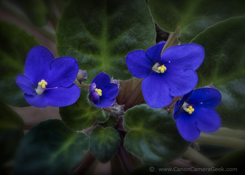 Canon EOS 70D Violet f/20 1 second  ISO 125  24-105mm f/4.0 Lens